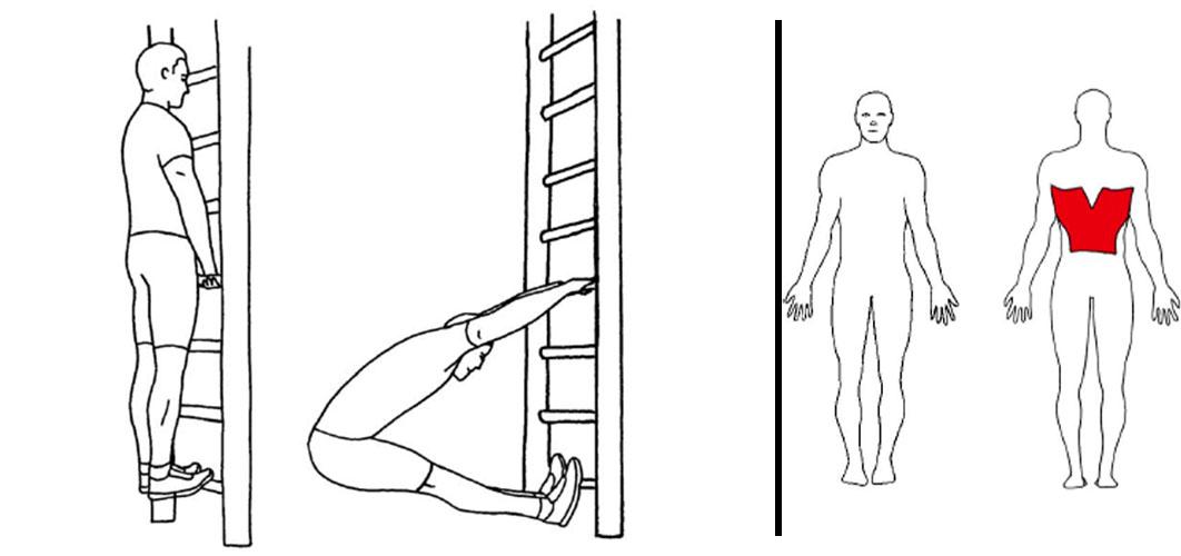 Vertical pike pull i ribbevegg