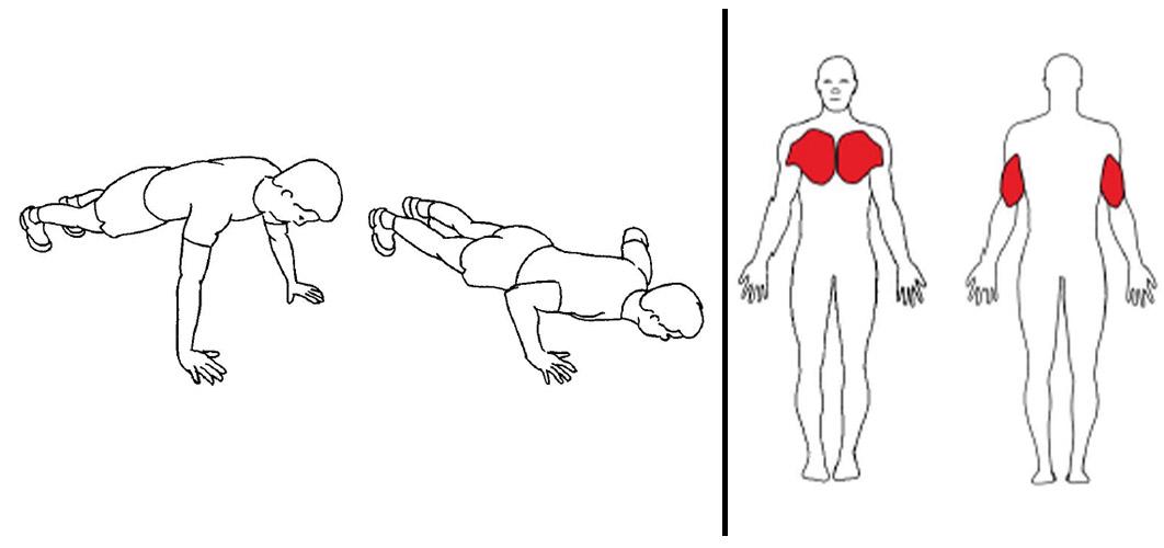 Push ups på knær eller tær