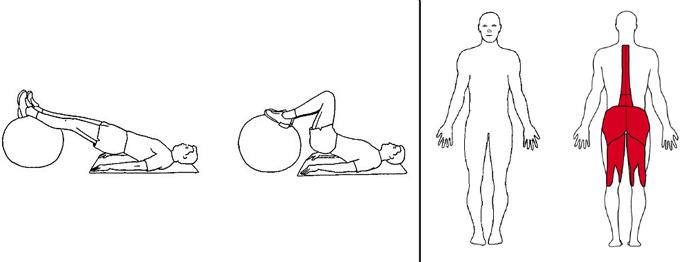 Illustrasjons bilde av liggende lårcurl m/ball