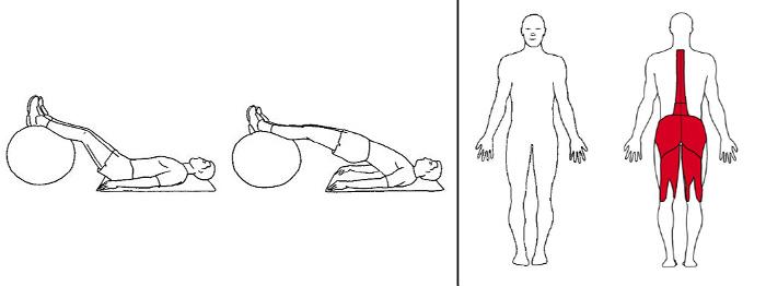 Illustrasjons bilde av liggende bekkenløft m/ball