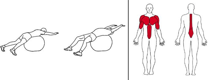 Illustrasjons bilde av liggende rotasjon på ball