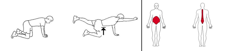 Illustrasjons bilde av «Firfot»ben- og armløft øvelse på treningsmatte