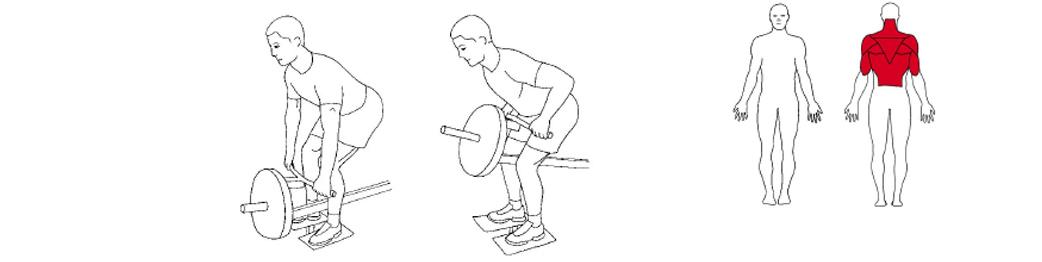 Illustrasjon av T-bar roing øvelse