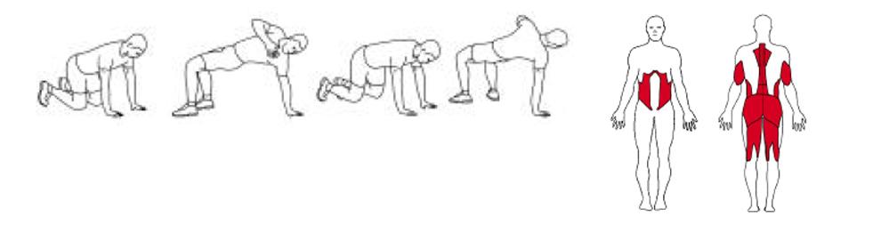 Illustrasjons bilde av utførelse av enarms table top øvelse