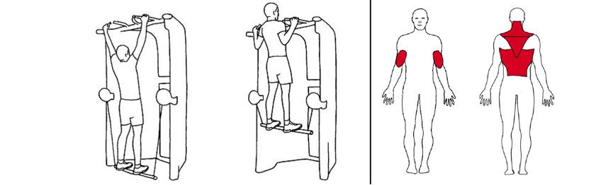 Illustrasjonsbilde av Chins m/hjelp fra stangen med trekkapparat