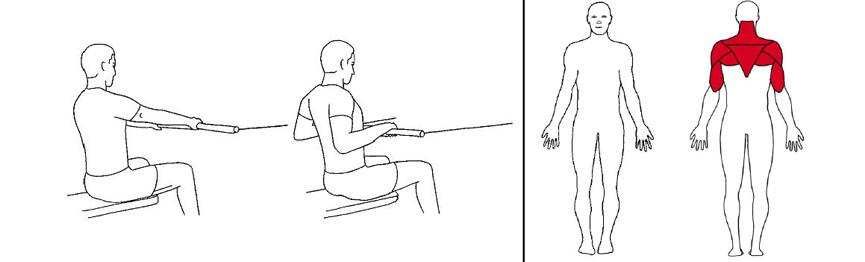 Illustrasjonsbilde av Sittende roing m/stang med trekkapparat