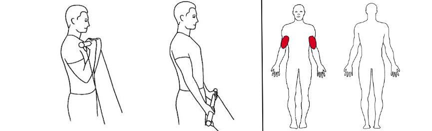 Illustrasjonsbilde av Bicepscurl m/stang med trekkapparat