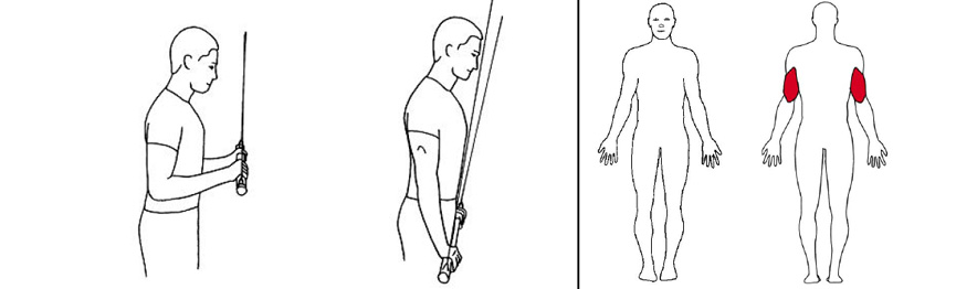 Illustrasjonsbilde av Triceps press m/stang med trekkapparat