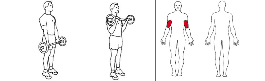 Illustrasjonsbilde av utførelse av stående bicepscurl med vektstang